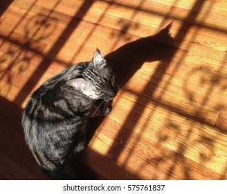 Cat and its shadow on a wooden floor in sunlight streaming through the window