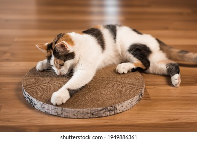 Cat sharpens its claws on a scratching post. A tricolor cat lies on the floor and sharpens its claws on a cardboard scratching post.