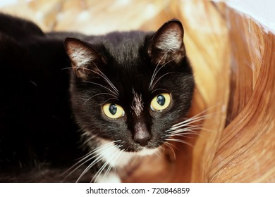 The cat from the shelter