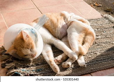 cat sick in a cone lie leisurely on a foot wipes at front yard