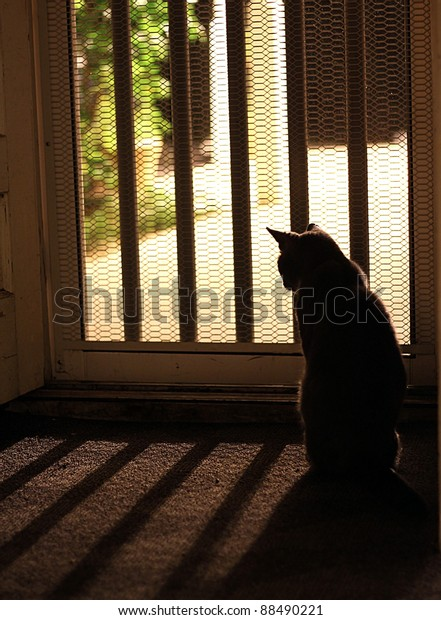 Cat Silhouette looking outside screen door