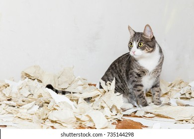 cat sit in chaos from wallpaper removal