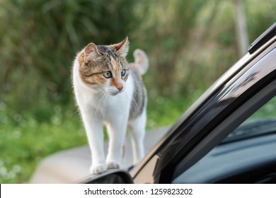 cat sit on a car in the outdoor