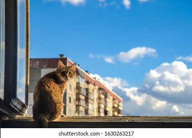 Cat sit on window frame.View from the window at the sky. sunny room.Cat sit on sunset. Open window.light against high house and blue sky.Kitty sit on wooden windowsill and look down
