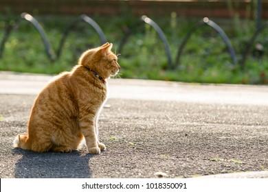 cat sit outdoor in the park