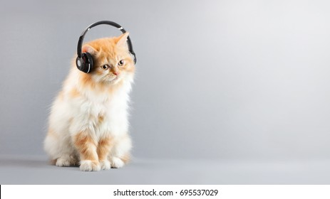 Cat Siting on Floor Listening music with Headphones And Copy space at right of farme.Minimal style and  music concept