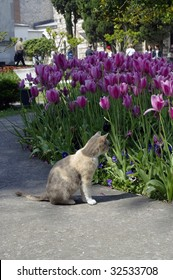 A cat sits besides tulips in a palace in Turkey