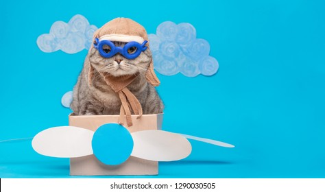 The cat sits a cute pilot Sedit aviator in a paper plane, a Scottish Whiskas in a mask and goggles of an airplane pilot. The concept of the pilot, super cat, flight.