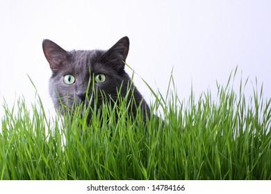 stalking cat images stock photos  vectors  shutterstock