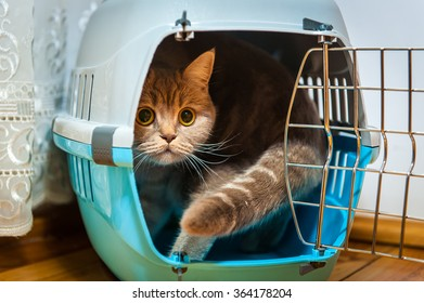 Cat sits inside pet carrier