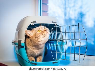 Cat sits inside pet carrier near window