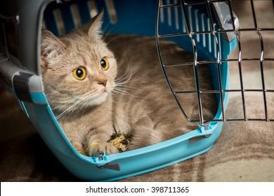 Cat sits inside pet carrier.