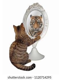 The cat sits near the mirror and looks at his unusual reflection. White background.