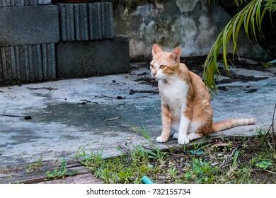 A cat sits next to a bush.