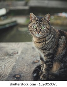 Cat sits on a board with a background river