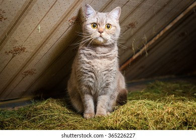 Cat sits on a hay in a barn