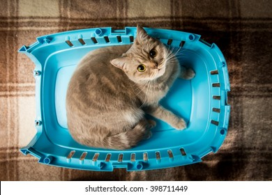 A cat sits on a plastic bottom part of pet carrier cage