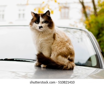 Cat sits on the top of the car