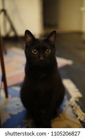 A cat sits talls and stairs into the camera.  Large black eyes.