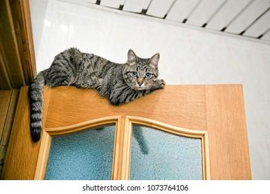 Cat Climbing Wall Images Stock Photos Vectors Shutterstock