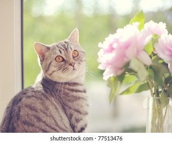 The cat sits at a window