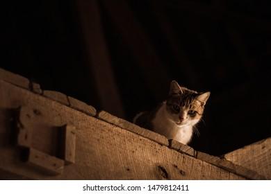 Cat Sitting in Barn Shadow