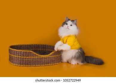cat sitting in a basket on a yellow isolated background