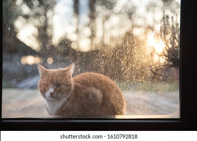 A cat sitting in beautiful light. A cat sitting behind dirty glass. Cat outside the dirty window.