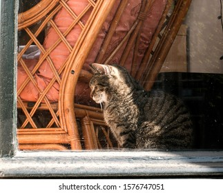 Cat sitting behind a rattan chair looking out of a window