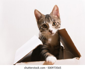 The cat is sitting in a box. Kitten peeking out of the box