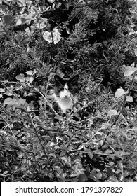 Cat sitting in bushes, taken in black and white.