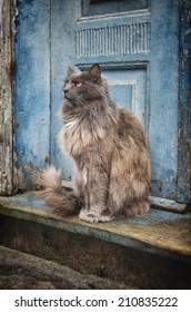 Cat sitting by the door
