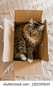 Cat sitting in a cardboard box