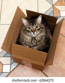 Cat sitting in a cardboard box