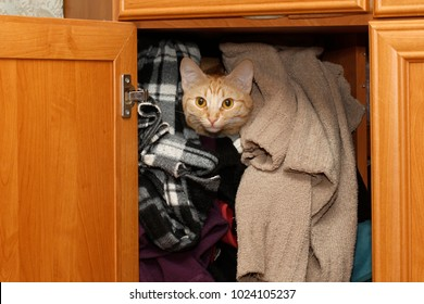 Cat sitting in the closet between clothes