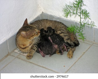 A cat sitting in a corner with four very young kittens