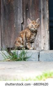 Cat sitting in front of barn door