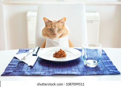 Cat sitting in front on a table set like a human with wet food on the plate