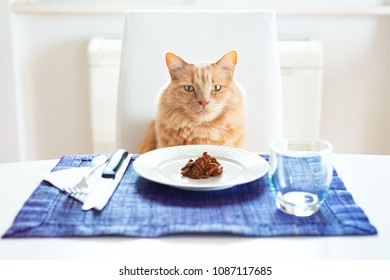 Cat sitting in front on a table set like a human with his favourite wet food on the plate