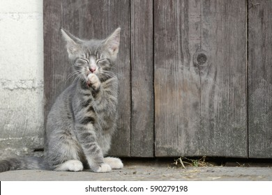 cat sitting in front of shed and grooming fur