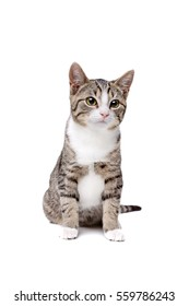cat sitting in front of a white background