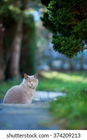 A cat is sitting in the garden.