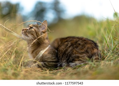 Cat sitting in the grass with collar on him