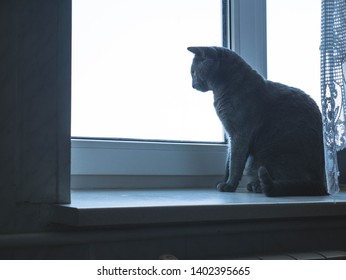 The cat is sitting at home and looking out the window