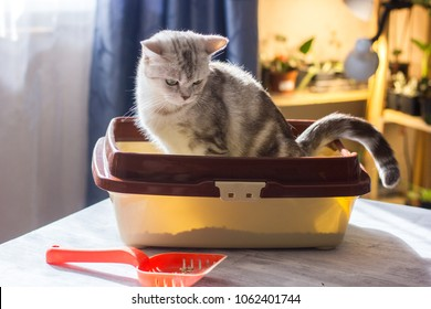Cat sitting in a cat litter box or tray.