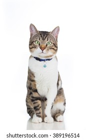 Cat  sitting and looking to camera isolated on white background.