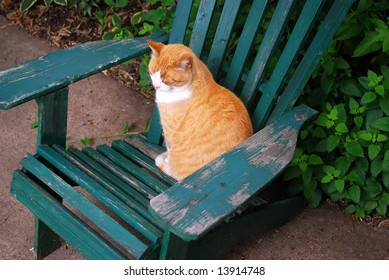 A cat sitting on an adirondack chair