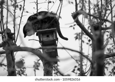 cat sitting on birdhouse waiting for its prey