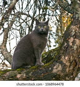 A cat sitting on a branch of old apple tree