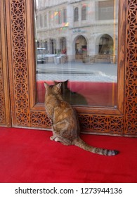 Cat sitting on red carpet at door entrance